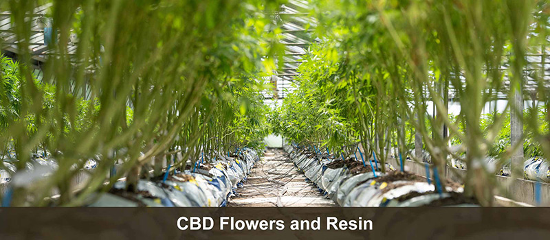 CBD Flowers and Resin